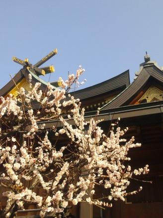 梅まつり Plum Blossom Festival